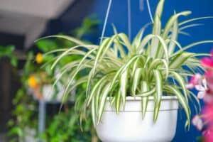 pet-friendly houseplants