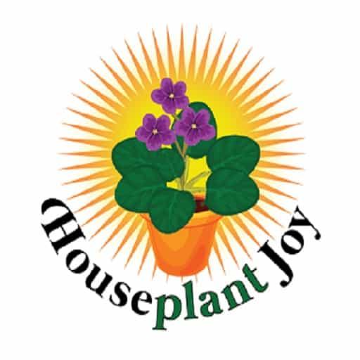 sun-loving houseplants