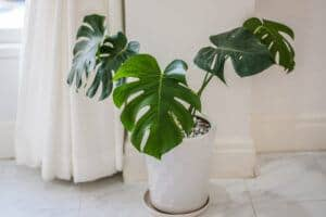air-purifying houseplants