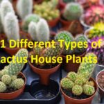 different types of cactus house plants