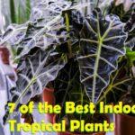 best indoor tropical plants