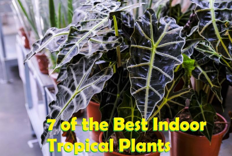 7 of the Best Indoor Tropical Plants
