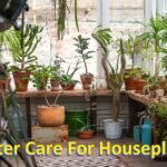 winter care for houseplants