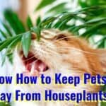 how to keep pets away from houseplants