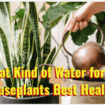 what kind of water for houseplants
