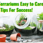 are terrariums easy to care for