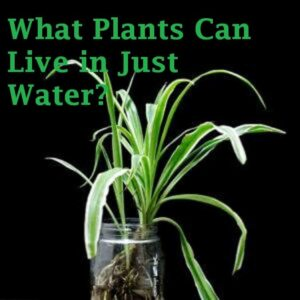 what plants can live in just water