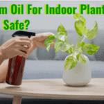 neem oil for indoor plants