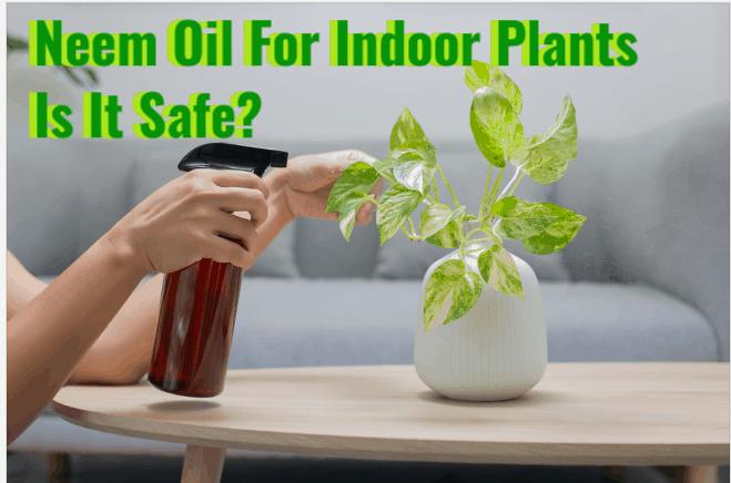 Neem Oil For Indoor Plants- Is it safe?