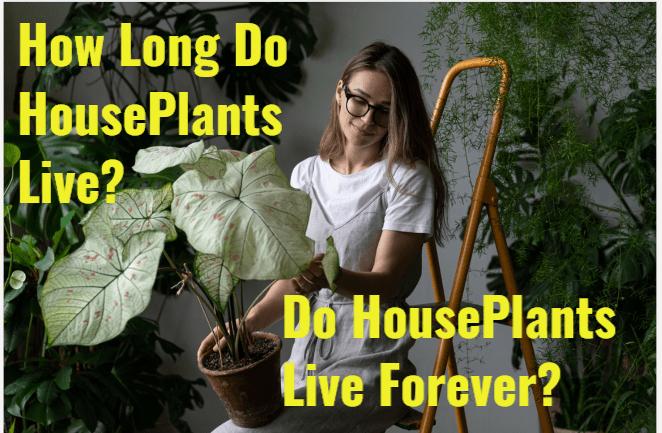 How Long Do Houseplants Live?