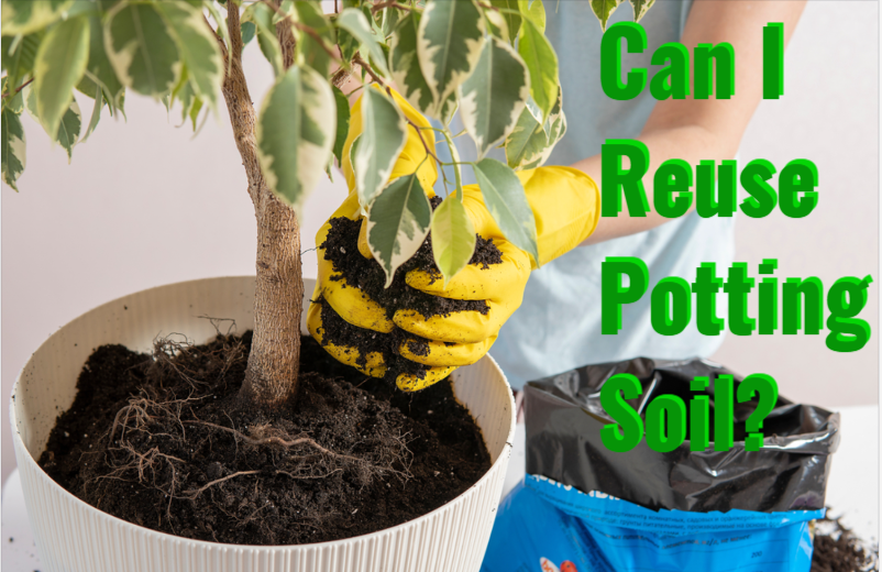 Can I Reuse Potting Soil? Use Our Tips!