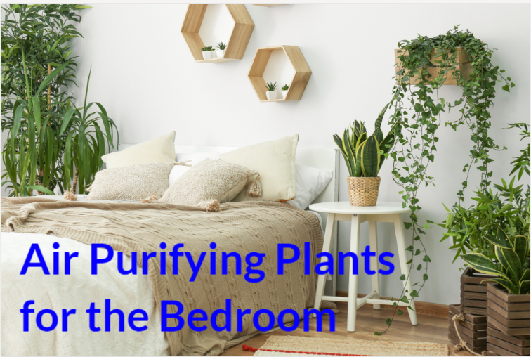 Air Purifying Plants for the Bedroom
