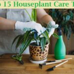 houseplant care tips