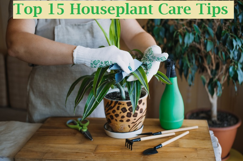 Top 15 Houseplant Care Tips