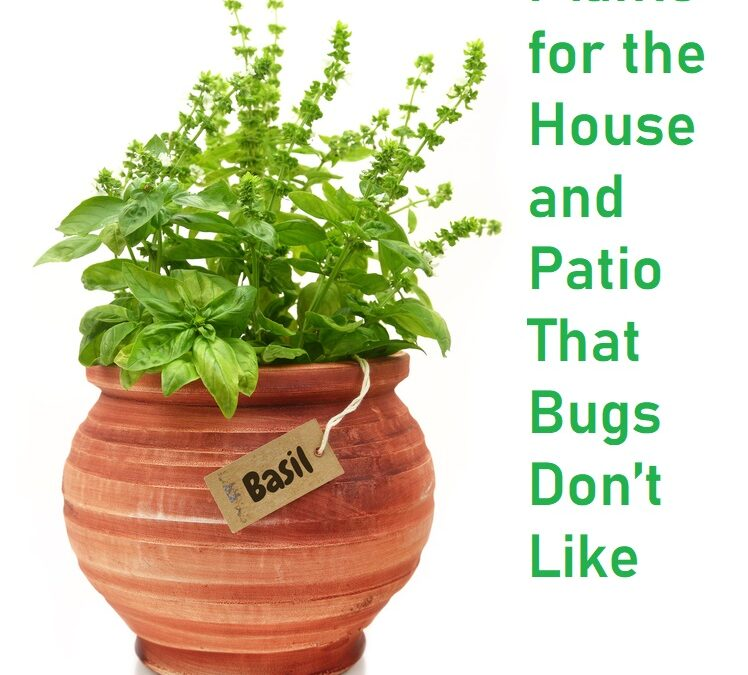 Plants for the House and Patio That Bugs Don't Like
