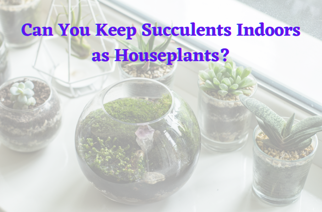 Can You Keep Succulents Indoors as Houseplants?