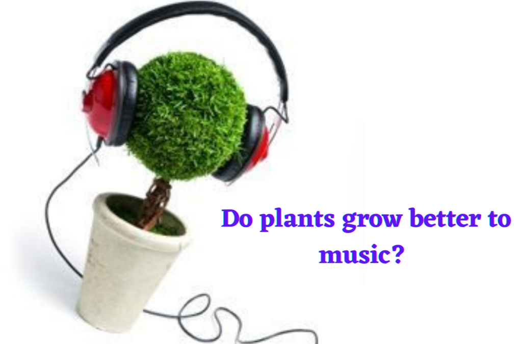 Do Plants Grow Better to Music?