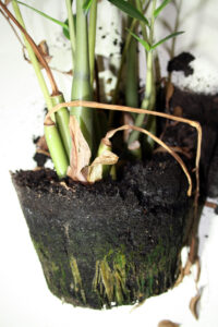 how to reverse root rot