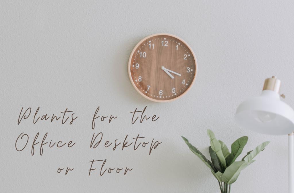 Houseplants for the Office Desktop or Floor